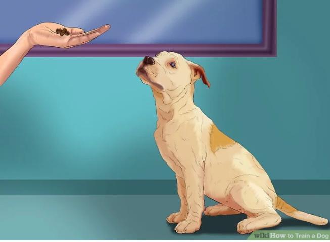 """سگ را متوجه دستور """"بنشین"""" کنید"""