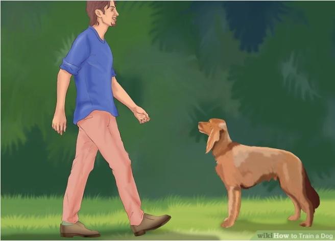 نشستن سگ به دستور شما