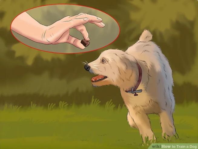 سگ ها را با معده خالی آموزش دهید