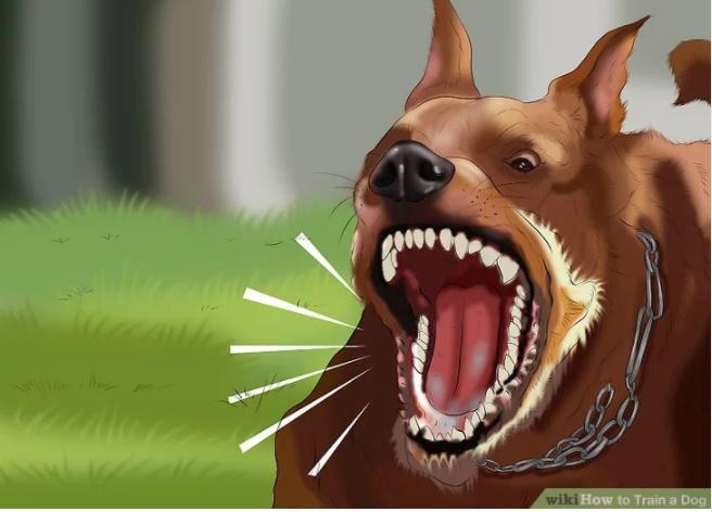 جلوی پارس کردن سگ را بگیرید