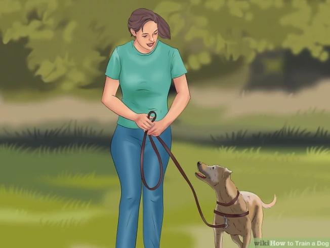 سگ خود را با مهار بیرون ببرید