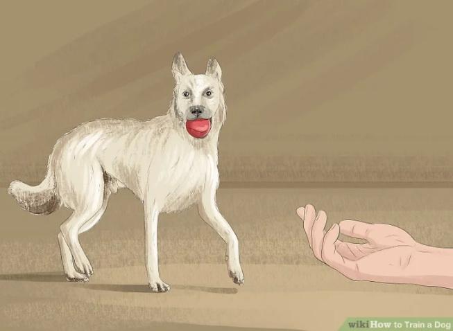 حواس سگ را با این دستور به خود جلب کنید