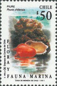 تمبر pyura chilensis