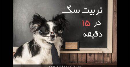 چگونه سگ را تربیت کنیم