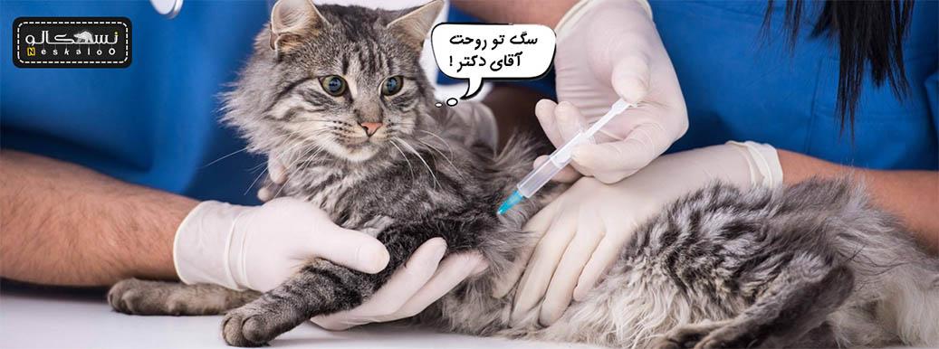 مریض شدن گربه